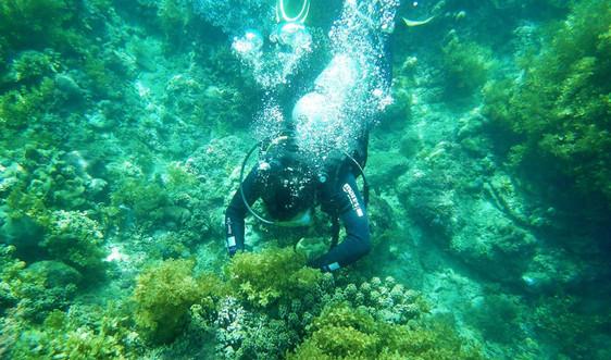 Tổ chức, cá nhân có hoạt động liên quan đến khu bảo tồn biển: Phải thực hiện đúng pháp luật