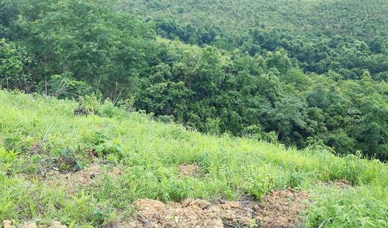 Lạng Sơn: Vướng mắc trong xây dựng phương án sử dụng đất có nguồn gốc từ lâm trường