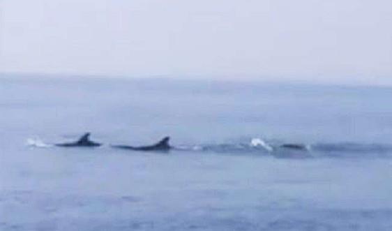 Bảo vệ đàn cá heo xuất hiện ở vùng biển Cửa Đại, tỉnh Quảng Nam.