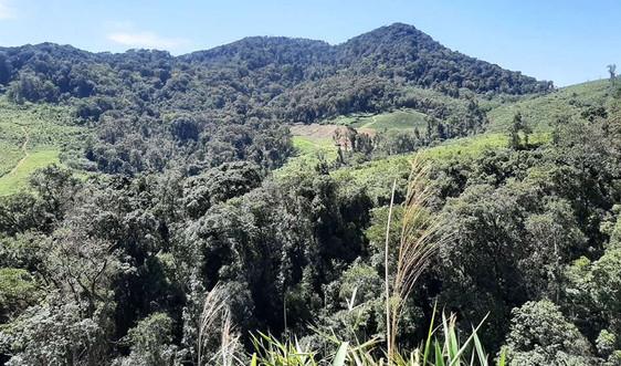 Kon Tum: Kiểm tra, xác định diện tích rừng cung ứng dịch vụ môi trường rừng