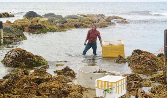 Làm gì để bảo tồn biển trước sức ép phát triển kinh tế?