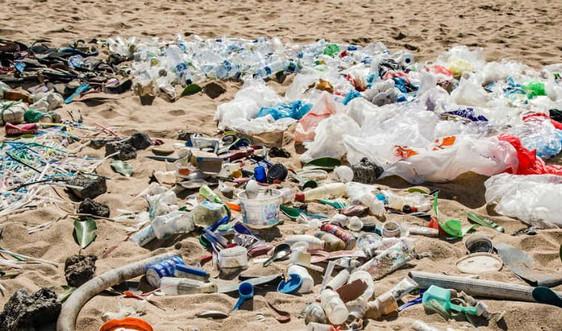 Ảnh hưởng của nhựa dùng một lần đến sinh vật biển và con người