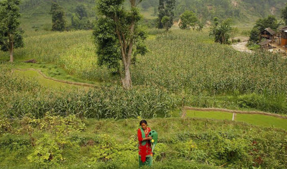 Hơn 39 triệu USD được phê duyệt cho quỹ hỗ trợ chống BĐKH ở Nepal của LHQ