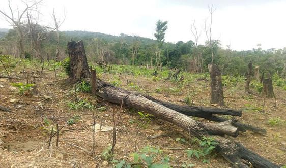 Quảng Bình: Rừng tự nhiên Cao Quảng bị lấn chiếm nghiêm trọng