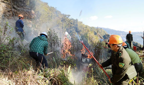 Lào Cai: Triển khai phương án phòng, chống cháy rừng