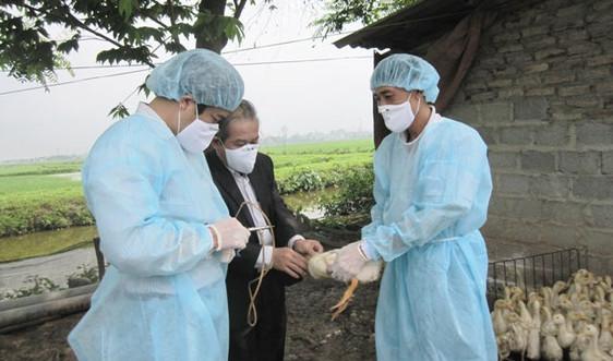Hà Nội xuất hiện ổ dịch cúm A/H5N6 trên đàn gia cầm
