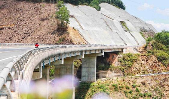 Hàng rào bảo vệ cao tốc La Sơn - Túy Loan bị tháo dỡ để khai thác gỗ