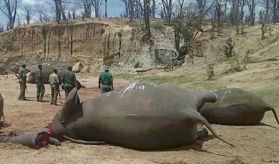 Tiêu dùng ngà voi ở Trung Quốc có xu hướng giảm
