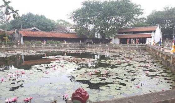 Ngày Xuân, thăm ngôi chùa phát tích 1 trong 3 dòng thiền lớn nhất Việt Nam