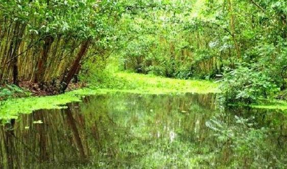 ĐBSCL: Phục hồi các vùng đất ngập nước