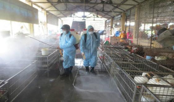 Tiêu hủy hơn 43.000 con gia cầm ở 5 tỉnh, thành phố vì dịch cúm A/H5N6