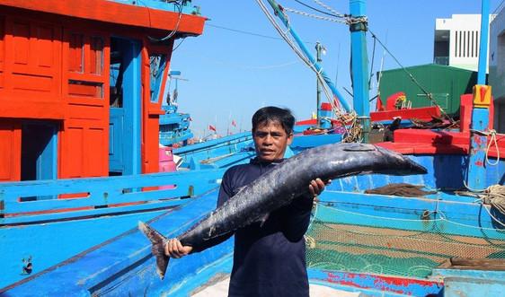 Đà Nẵng: Không có tàu cá đánh bắt trái phép ở vùng biển nước ngoài