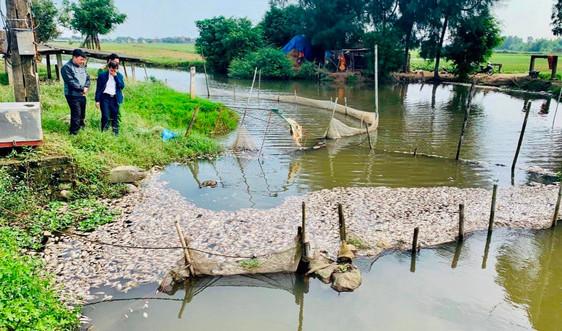 Vụ cá chết trắng sông Chanh (Ninh Bình): Tăng cường bảo vệ môi trường tại KCN Khánh Phú