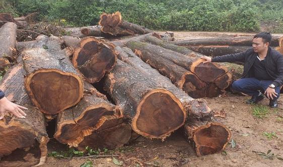 Quảng Trị: Nghi vấn mở đường qua rừng đặc dụng để vận chuyển gỗ?