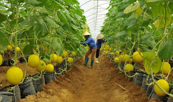 Tích tụ đất đai để nông nghiệp bứt phá bền vững: Ẩn chứa yếu tố chưa bền vững