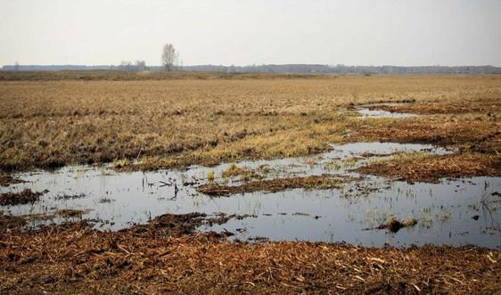 Dữ liệu mực nước: Chìa khóa để giảm khí thải nhà kính do suy thoái đất than bùn