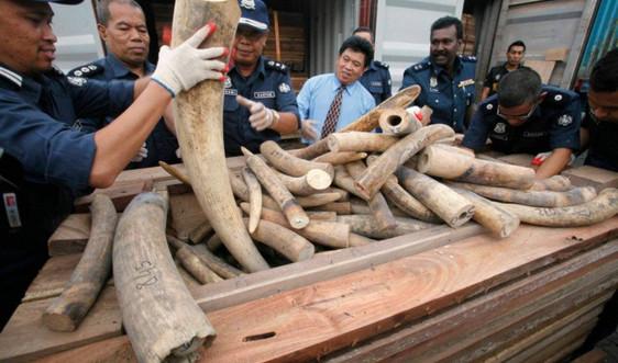 Chiến lược mới về điều tra tài chính liên quan tới buôn lậu động vật hoang dã