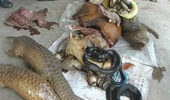 Tổ chức HSI kêu gọi Việt Nam cần lập tức đóng cửa các chợ buôn bán động vật hoang dã