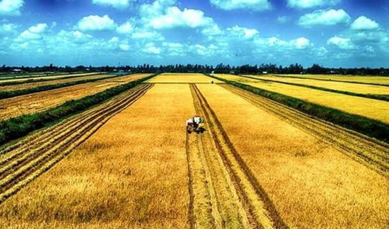 """Hà Tĩnh: """"Gỡ vướng"""" tích tụ ruộng đất nhằm hướng đến nền nông nghiệp hàng hóa quy mô lớn"""