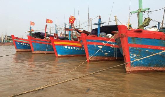 Thanh Hóa: 28 vụ vi phạm về khai thác, bảo vệ nguồn lợi thủy sản bị xử phạt 180 triệu đồng