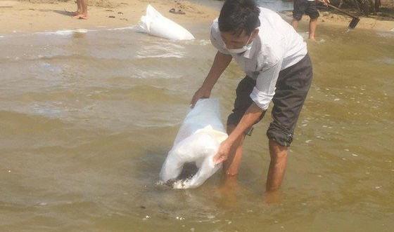 Quảng Ngãi: Thả 1,5 triệu cá, tôm giống tái tạo nguồn lợi thủy sản