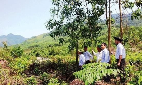 Quảng Nam: Đẩy nhanh tiến độ thực hiện kiểm kê đất đai năm 2019