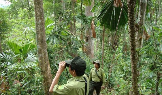 Quảng Ngãi: 29 tỷ đồng mở rộng diện tích rừng phòng hộ