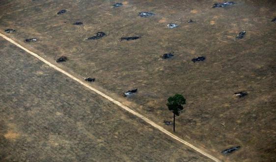 Brazil huy động quân đội để chống lại nạn phá rừng Amazon tăng cao