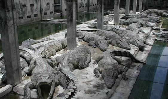 Phát hành phim ngắn Chấm dứt gây nuôi thương mại động vật hoang dã nguy cấp