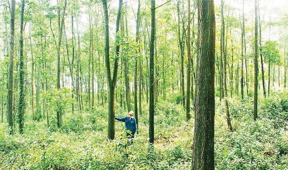 Gỡ vướng trong công tác rà soát, điều chỉnh quy hoạch 3 loại rừng tại Quảng Trị