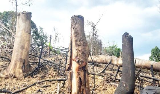 Huế: Phá rừng đầu nguồn, nhiều đối tượng bị phạt tù