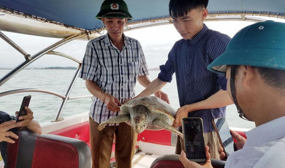 Quảng Ninh: Thả cá thể rùa biển nặng 15kg về môi trường tự nhiên