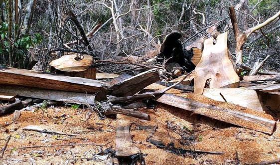 Bắt 6 người khai thác trái phép hàng trăm khối gỗ rừng
