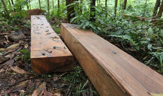 Quảng Nam: Điều tra, làm rõ vụ phá rừng trái phép ở Bắc Trà My