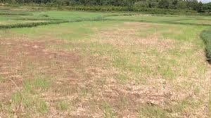 Khô hạn, thiếu nước tiếp tục lan rộng ở Trung Bộ