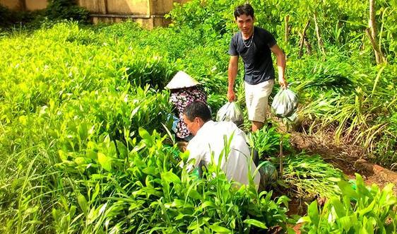 Điện Biên: Trồng rừng phòng hộ khó đạt kế hoạch do chậm vốn