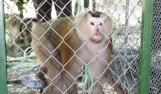 Hà Tĩnh: Một hộ dân tự nguyện giao nộp cá thể khỉ đuôi lợn và trăn đất cho Vườn quốc gia Vũ Quang