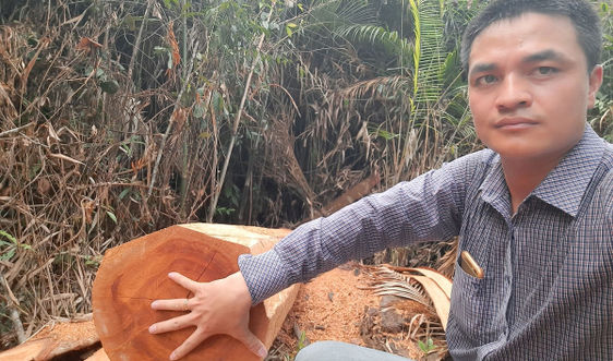"""Tiếp bài """"Đình Lập – Lạng Sơn: Rừng Lim tự nhiên đang bị """"khai tử"""": Liệu có hòa cả làng?"""