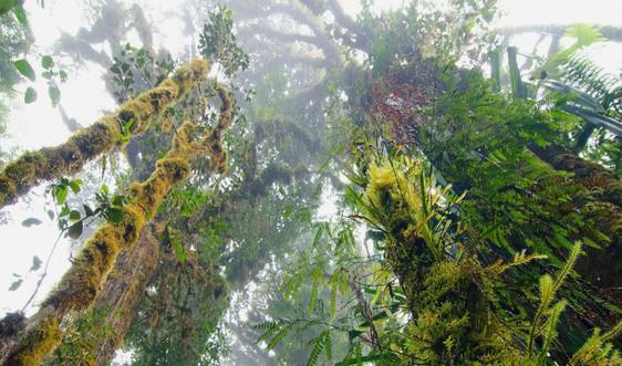 Liên Hiệp Quốc: Nạn phá rừng đã giảm nhưng vẫn còn là mối lo ngại