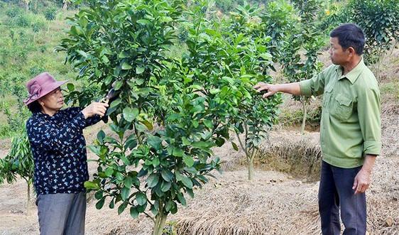 Mường Ảng (Điện Biên): Bắt hạt giống nảy mầm trên triền đất dốc
