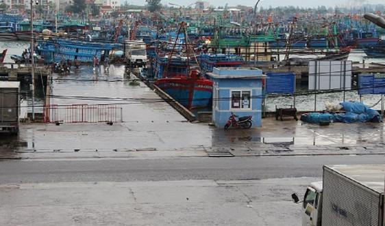 Đà Nẵng: Đảm bảo công tác phòng chống Covid tại Âu thuyền và Cảng cá Thọ Quang