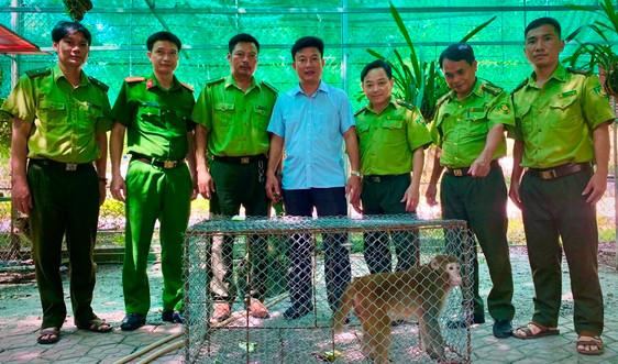Hà Tĩnh: Nhiều động vật quý hiếm được thả về  Vườn quốc gia Vũ Quang