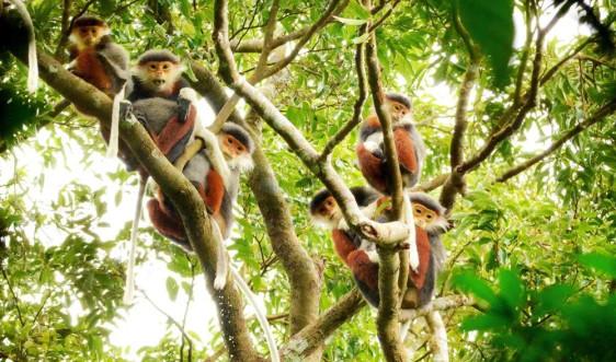 Đà Nẵng: Phát động cuộc thi sáng tác ảnh về môi trường và đa dạng sinh học