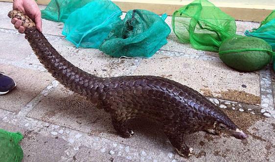 Quảng Ngãi: Cấp bách bảo vệ động vật hoang dã