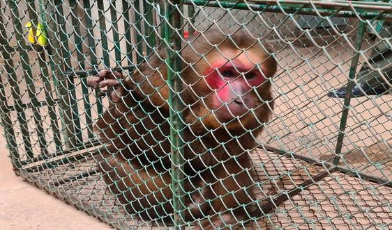 Quảng Bình: Tiếp nhận nhiều cá thể động vật hoang dã