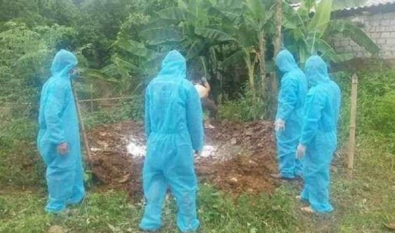 Nghệ An: Phê duyệt Kế hoạch phòng, chống bệnh Dịch tả lợn Châu Phi