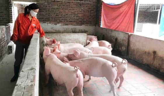 Quảng Ninh: Quyết liệt phòng, chống khống chế bệnh dịch tả lợn Châu Phi