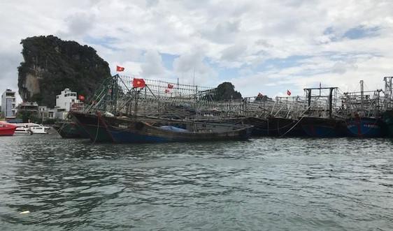 Quảng Ninh: Chủ động các biện pháp phòng chống bão số 7