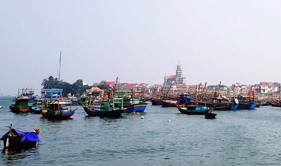 Thanh Hóa: Nỗ lực bảo tồn, phát triển đa dạng sinh học biển