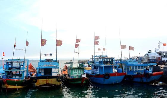 Quảng Ngãi: Đẩy mạnh phát triển kinh tế biển, khai thác, nuôi trồng thủy sản bền vững